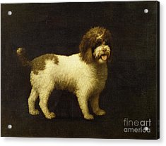 A Water Spaniel Acrylic Print by George Stubbs