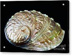Abalone Shell Acrylic Print by Bill Brennan - Printscapes