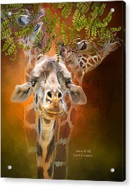 Above It All Acrylic Print by Carol Cavalaris