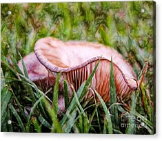 Abstract Fungus In Grass Acrylic Print by Wendy Townrow