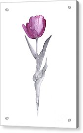 Abstract Tulip Flower Watercolor Painting Acrylic Print by Joanna Szmerdt
