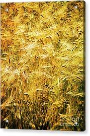 Abstract Wheat Acrylic Print by Silvia Ganora