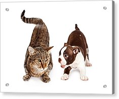Adult Cat Annoyed With Playful Puppy Acrylic Print by Susan Schmitz