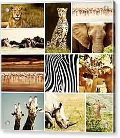 African Animals Safari Collage  Acrylic Print by Anna Omelchenko