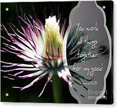 After The Petals Are Gone - Verse Acrylic Print by Anita Faye