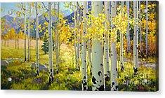 Afternoon Aspen Grove Acrylic Print by Gary Kim
