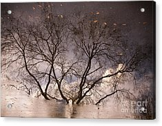 Afternoon Reflection Acrylic Print by Derek Selander