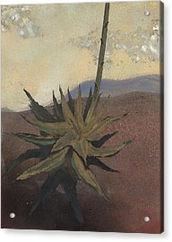 Agave Acrylic Print by Fred Chuang