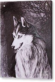 Akela Acrylic Print by Anna  Duyunova