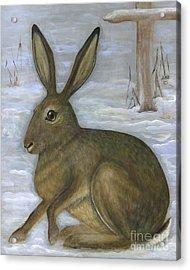 Albert The Hare Acrylic Print by Anna Folkartanna Maciejewska-Dyba