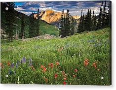 Albion Basin Wildflowers Acrylic Print by Utah Images