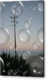 Alca Bubbles Acrylic Print by Holly Ethan