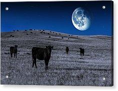 Alien Cows Acrylic Print by Todd Klassy