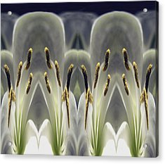 Alien Lily Acrylic Print by Terence Davis