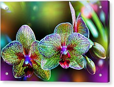Alien Orchids Acrylic Print by Bill Tiepelman