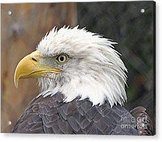 All American Bird Acrylic Print by Martha Ayotte