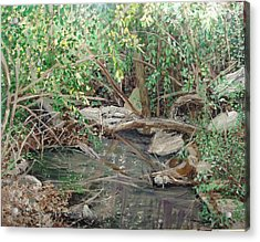 Alma House Creek Acrylic Print by Sharon  De Vore
