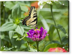 Along Came The Butterfly Acrylic Print by Bill Cannon