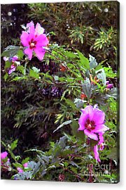 Althea Acrylic Print by Fred Jinkins