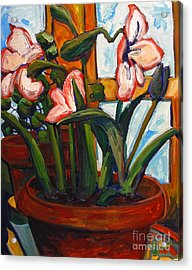 Amaryllis Gigantus Acrylic Print by Charlie Spear