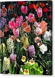Amazing Flowers Acrylic Print by Marty Koch