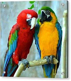 Amazon Parrots Acrylic Print by Dani Stites