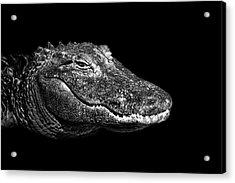 American Alligator Acrylic Print by Malcolm MacGregor
