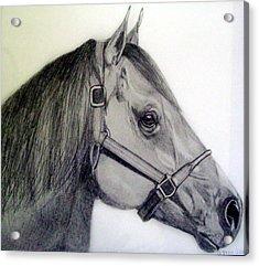 American Quarter Horse Acrylic Print by Gary Stull