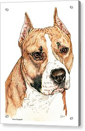American Staffordshire Terrier Acrylic Print by Kathleen Sepulveda