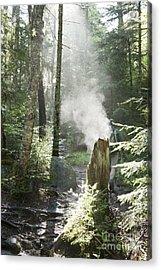 Ammonoosuc Ravine Trail - White Mountains New Hampshire Usa Acrylic Print by Erin Paul Donovan