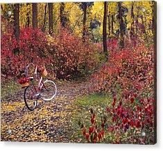 An Autumn Bike Trek Acrylic Print by Leland D Howard