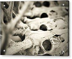 An Echo Of Mortality Acrylic Print by Rebecca Sherman