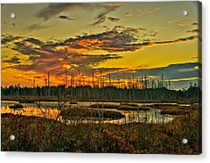 An November Sunset In The Pines Acrylic Print by Louis Dallara