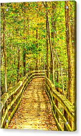 An Old Growth Bottomland Hardwood Forest Acrylic Print by Don Mercer