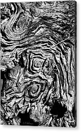 Ancient Stump Acrylic Print by Christopher Holmes