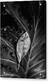 And I Will Catch You If You Fall Acrylic Print by Tom Mc Nemar