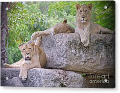 And The Living Is Easy Acrylic Print by Judy Kay