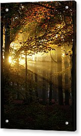 And Then There Was Light - Autumn Forest Acrylic Print by Roeselien Raimond