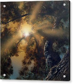 Andi's Oak Acrylic Print by Don Dixon