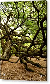 Angel Oak Acrylic Print by Greg Simmons