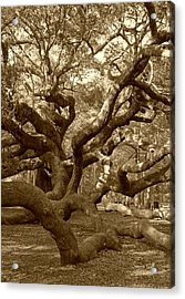 Angel Oak In Sepia Acrylic Print by Suzanne Gaff