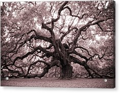 Angel Oak Tree Acrylic Print by Dustin K Ryan