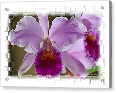 Angel Wings Orchid Acrylic Print by Madeline  Allen - SmudgeArt