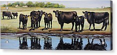 Angus Reflections Acrylic Print by Toni Grote