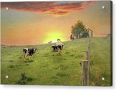 Annville Cows Acrylic Print by Lori Deiter