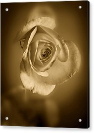 Antique Soft Rose Acrylic Print by M K  Miller