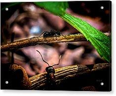 Ants Adventure Acrylic Print by Bob Orsillo