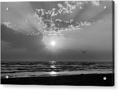 Any Color You Like Acrylic Print by Peter Chilelli