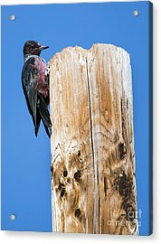 Any Tree Will Do Acrylic Print by Mike Dawson