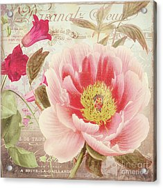 Aphrodite Peony Acrylic Print by Mindy Sommers